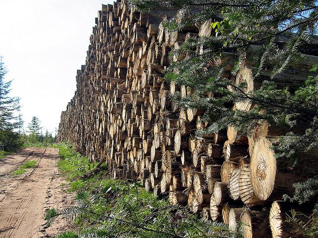 Pomiar, obliczenie miąższości i cechowanie surowego drewna